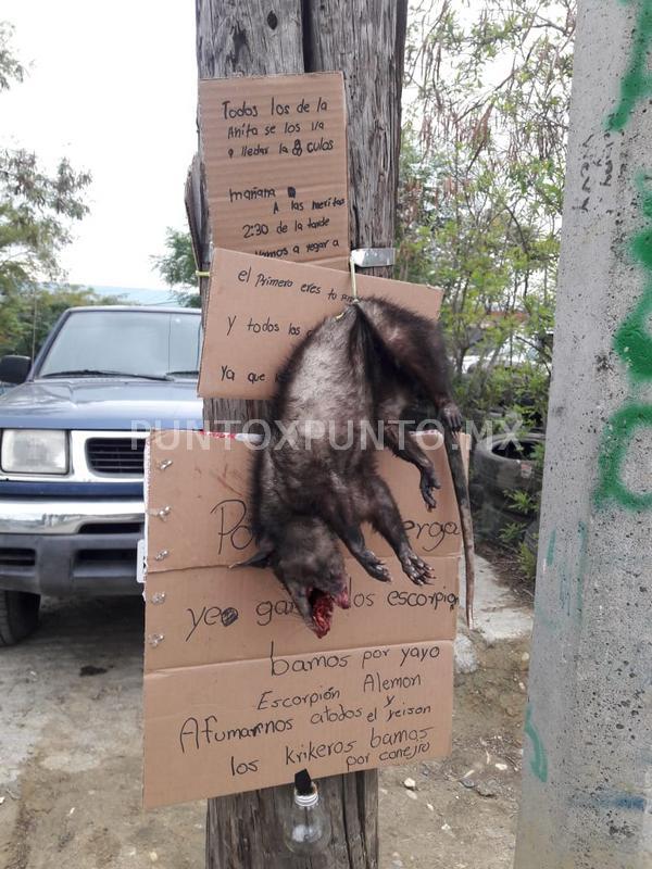 MOVILIZA A LA POLICIA MENSAJES AMENAZANTES Y CON ANIMAL MUERTO EN COLONIA DE MMORELOS